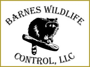 Barnes-Wildlife-Control-Logo