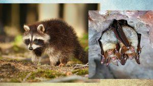 aboutus_header-ohio-wildlife-control-services