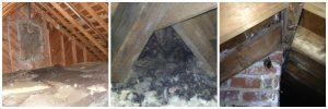 attic-waste-wildlife-collage