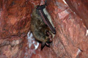A bat in a cellar