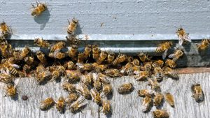 bee-hive-extraction