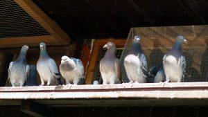 Buckeye Wildlife Solutions Bird Removal & Control birds-header-image