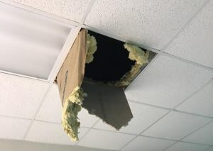 Raccoon Broke Through Office Ceiling