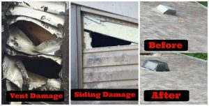 raccoon-damage-collage for Buckeye Advertising Solutions (BAS)