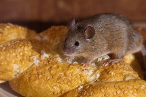 You don't want to find a mouse in your food, do you?