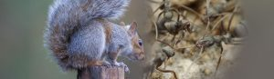 squirrel-and-ant-middle at BAS & BWS - Ohio Wildlife Control Services