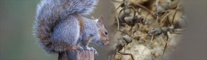 squirrel-and-ant-middle-tablet at BAS & BWS - Ohio Wildlife Control Services