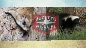 squirrel-skunk-header-image for Buckeye Advertising Solutions (BAS)