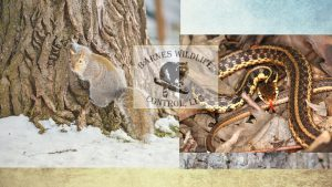squirrel-snake-header for Buckeye Advertising Solutions (BAS)