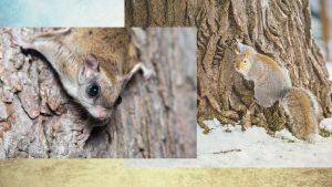 squirrels-header-for-ohio-squirrel-removal
