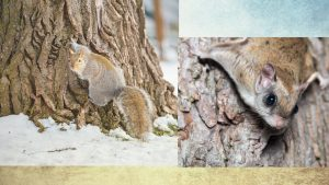 squirrels-header-home-page for Buckeye Advertising Solutions (BAS)