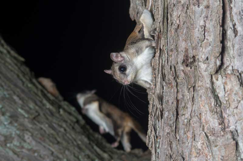 squirrel removal services
