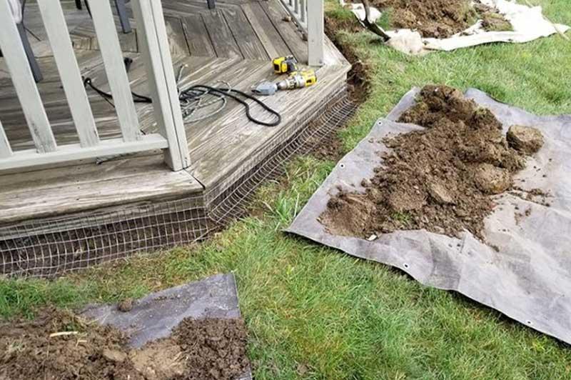 Ohio Groundhog Removal