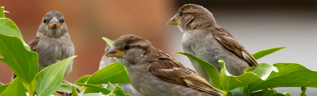 bird nest removal company
