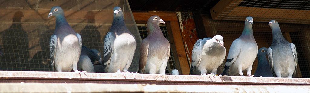 bird removal company